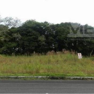 Terreno - Bosque Ipê - Jaraguá 84