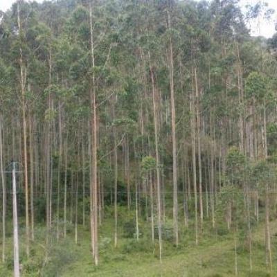 Terreno Rural - Reflorestamento