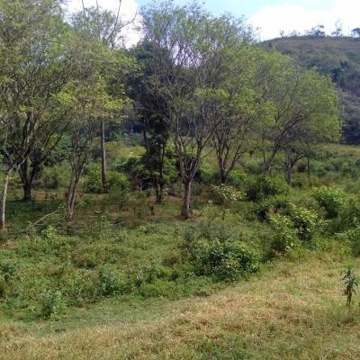 Áreas de 46.000 m² a 193.000 m² - Rodovia Presidente Dutra, Barra Mansa - RJ
